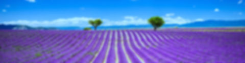 Frenchsoaps.co.uk.Provence Lavender Fiel