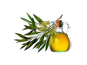 Melaleuca Alternifolia Leaf (Tea Tree) Oil