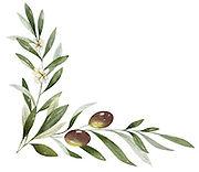Olive Blossom Left Small Bottom.jpg