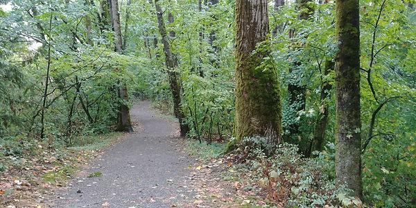 forest walk trail.jpg