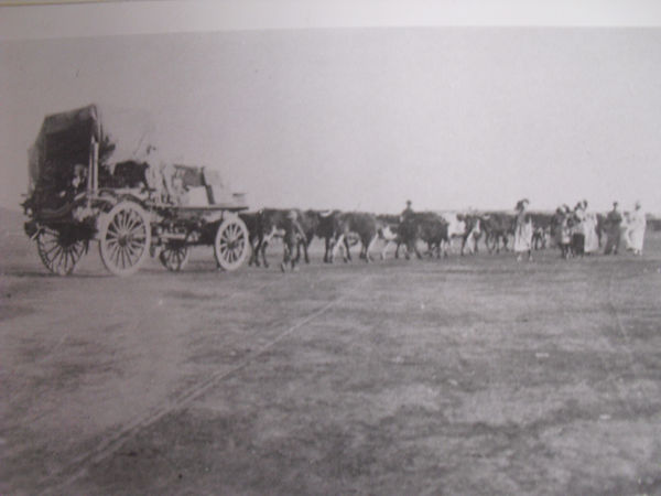 Ox wagon returns from Springfontein.jpg