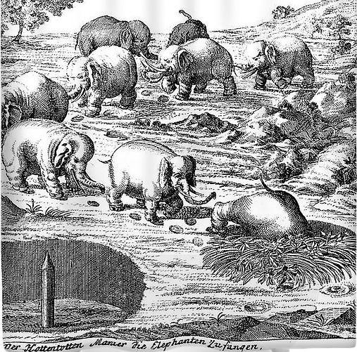 Khoi elephant hunt.jpg