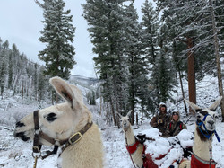 Orie Ethan Llamas Hiking Deer 2019 Snow.