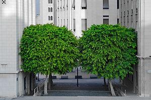 tree-3724912.jpg