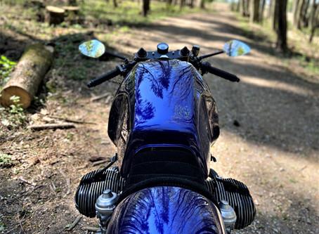 Into The Wild Wild Wood