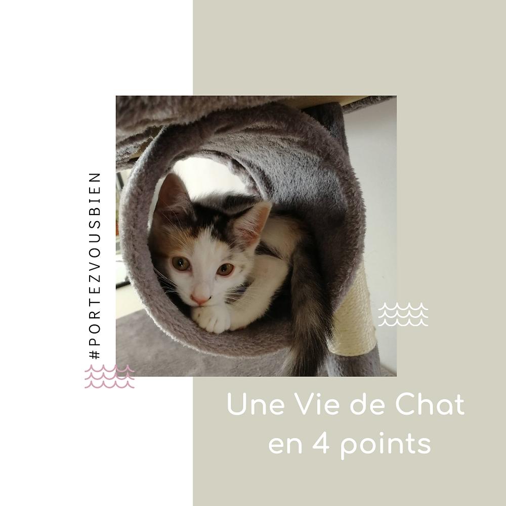 une vie de chat en 4 points, astuces et conseils d'organisation autour du chat et chaton