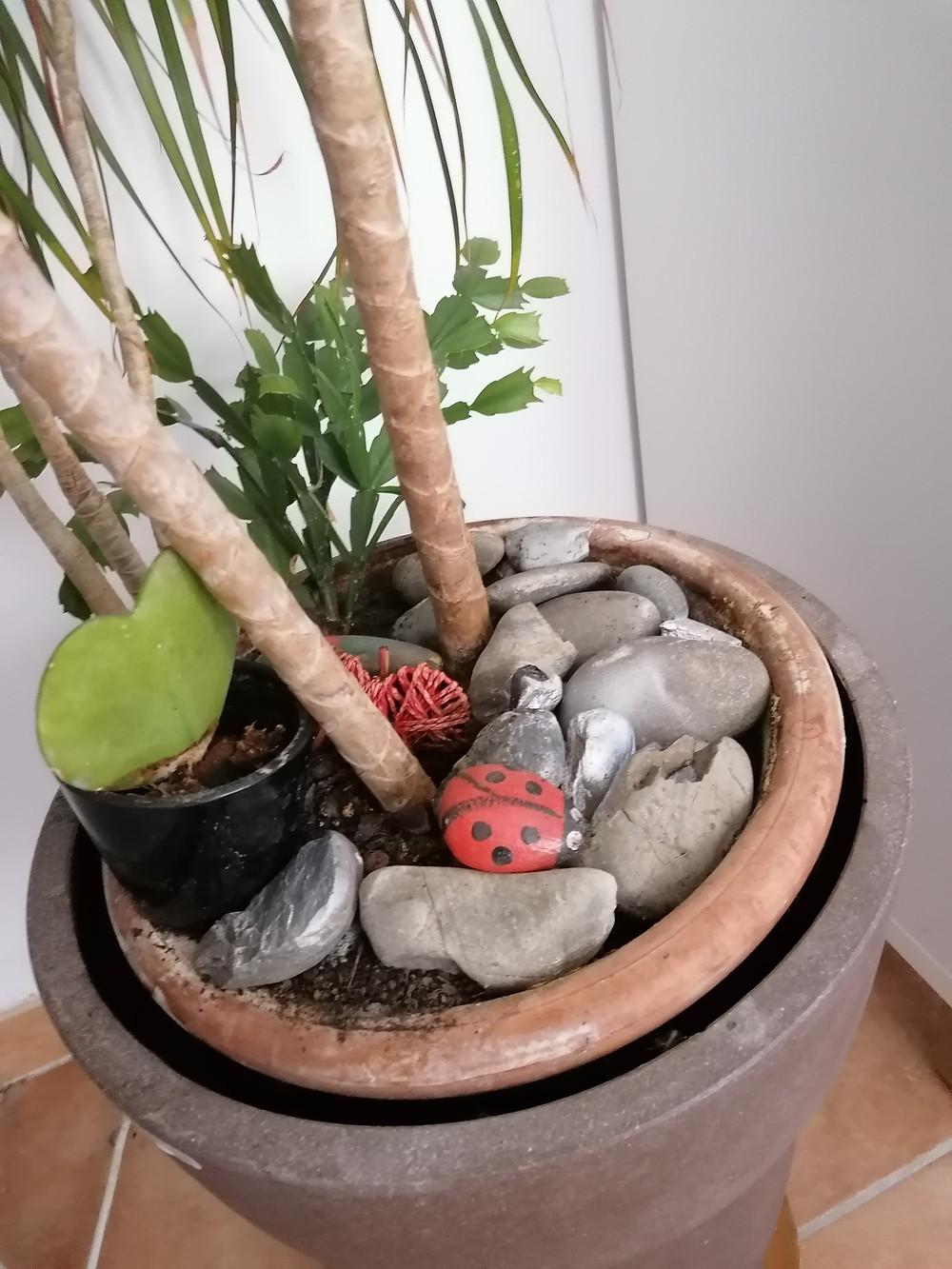 Galets au pied des plantes pour que le chat ne gratte pas