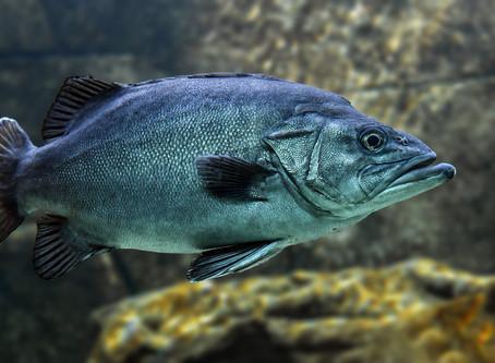 """Wenn Sie bei """"Mietaval"""" an einen Fisch denken sollten Sie weiterlesen."""