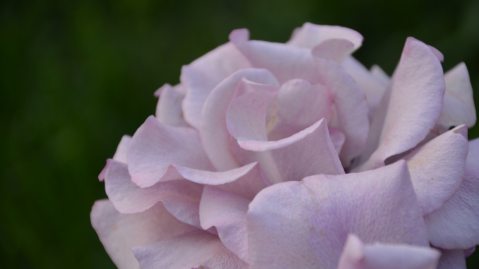 WEB Flower.png