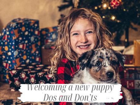 Welcoming a New Puppy: DOs and DONTs