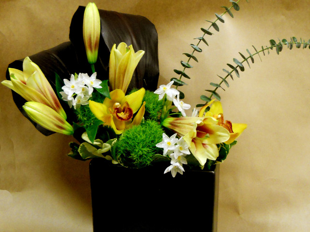 Asiatic Modern Lily