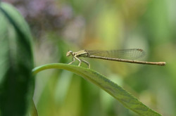 Insectes 29