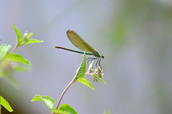 Insectes 27