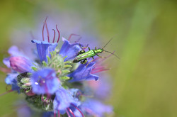Insectes 6