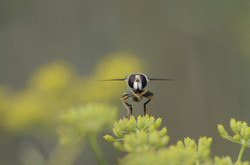 Insectes 10
