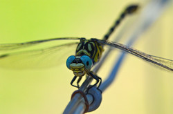Insectes 11