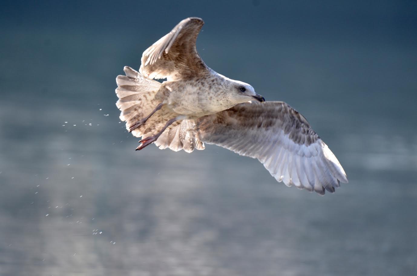 Oiseaux 19