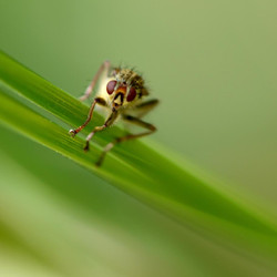 Insectes 14