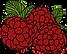 fruit 2.png