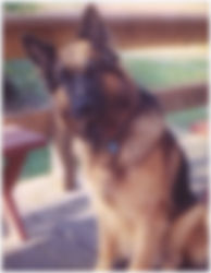 Author Jeff Burger - Fritz the German Shepherd Police Dog