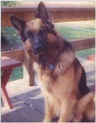 Author Jeff Burger - Fritz the German Shepherd Police Dog