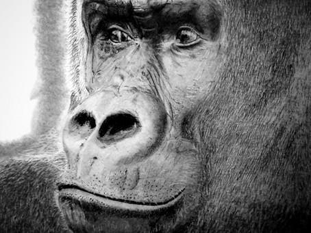 My 1st Animal Sketch