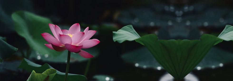 lotus flower5.jpg