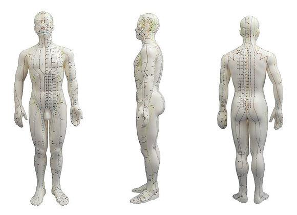 Modelo de Boneco Anatômico - Masculino