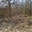 Thumbnail: 0.53 Acres (Benton County AR)
