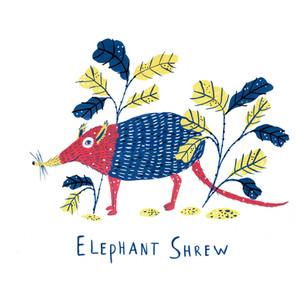 ElephantShrew_Web.jpg