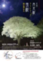 2020sakura.jpg
