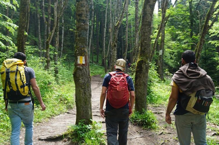 שלשה לתוך היער.jpg