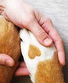 heart-paw-and-hand.jpg