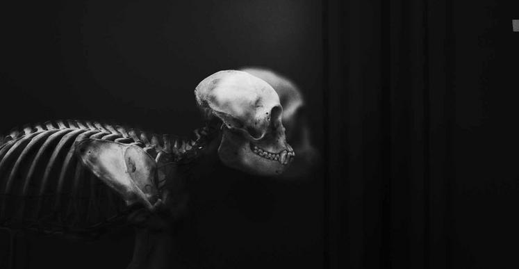 Gao Lei, Man's soul is neither white or black, but grey. (issu de l'ouvrage Les âmes grises, Philippe Claudel), 2015, impression pigmentaire, 16,5 x 24,9 cm (Ed. 7) et 28,8 x 43,5 cm (Ed.3)