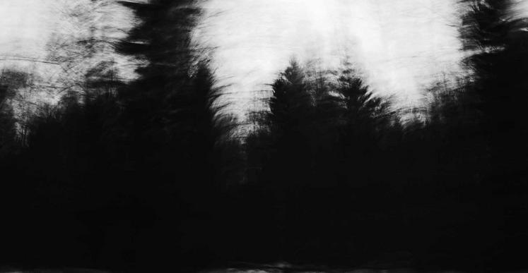 Gao Lei, «Ancestors» forest is kind of readily accessible «psychological transcendence» (citation issue de La poétique de l'espace, Gaston Bachelard), 2015, impression pigmentaire, 90 x 136 cm (Ed. 4) et 28,8 x 43,5 cm (Ed. 6)