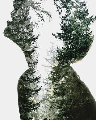 pngtree-Tree-Woody-Plant-Plant-Vascular-