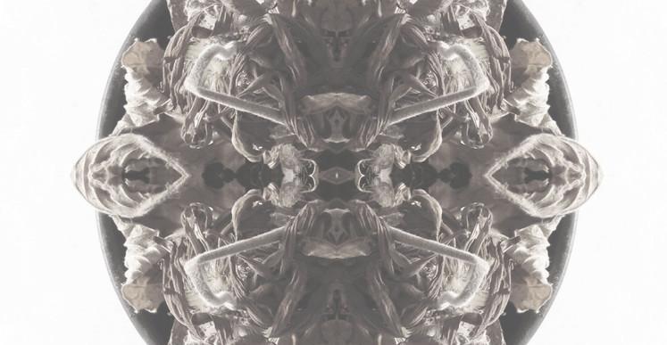 Thiago Berzoini, Sans titre (série The Garden of Dead Flowers), composition photographique