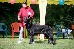 восточно-европейская овчарка, вео, питомник вео Моншер Вирсаль, выставка собак