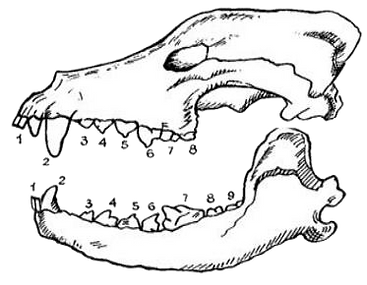 зубы.png