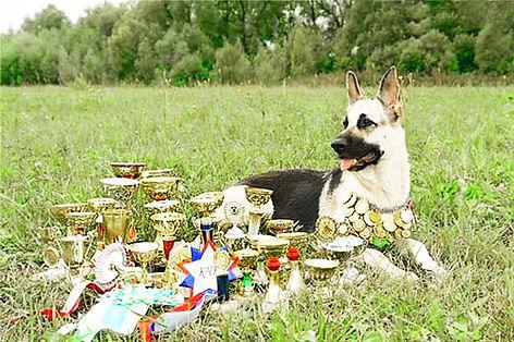 фото восточно-европейская овчарка, щенки вео, питомник вео, Eastern European shepherd dog
