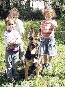 восточно-европейская овчарка, щенки вео, питомник вео, Eastern European shepherd dog