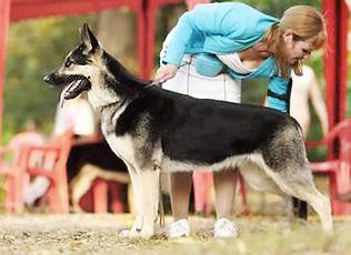 питомник восточно-европейских овчарок, щенки вео