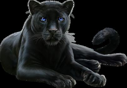 59878-leopard-felidae-black-cougar-panth