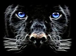 black panther blue eyes.jpg