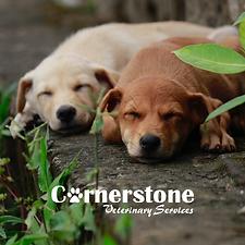 Cornerstone Veterinary Services