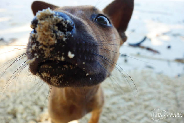 Pup on the beach | PNG