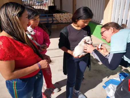 Local nonprofit is spreading compassion for pets in Mexico