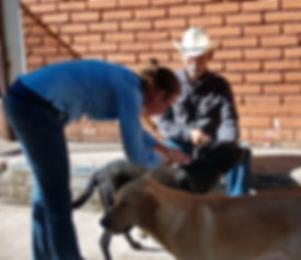 Dr. Shannon Dawkins veterinary services, primarily spay and neuter, to the animals of the Copper Canyon Region, Chihuahua,  Mexico.