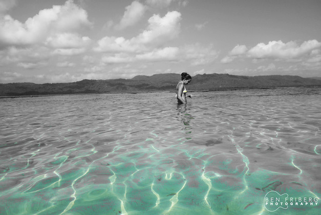 Searching for Starfish | PNG