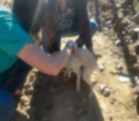 Veterinary services in Copper Canyon Mexico, spay and neuter clinics